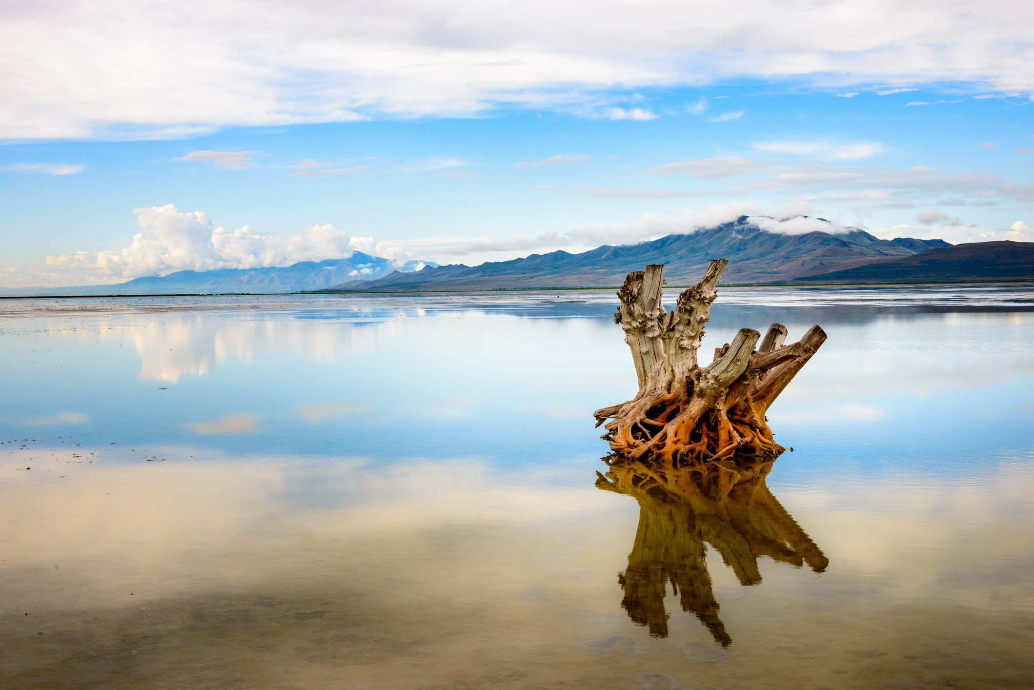shockingly reflective water in a big lake, an old tree root in the foreground with mountains in the background