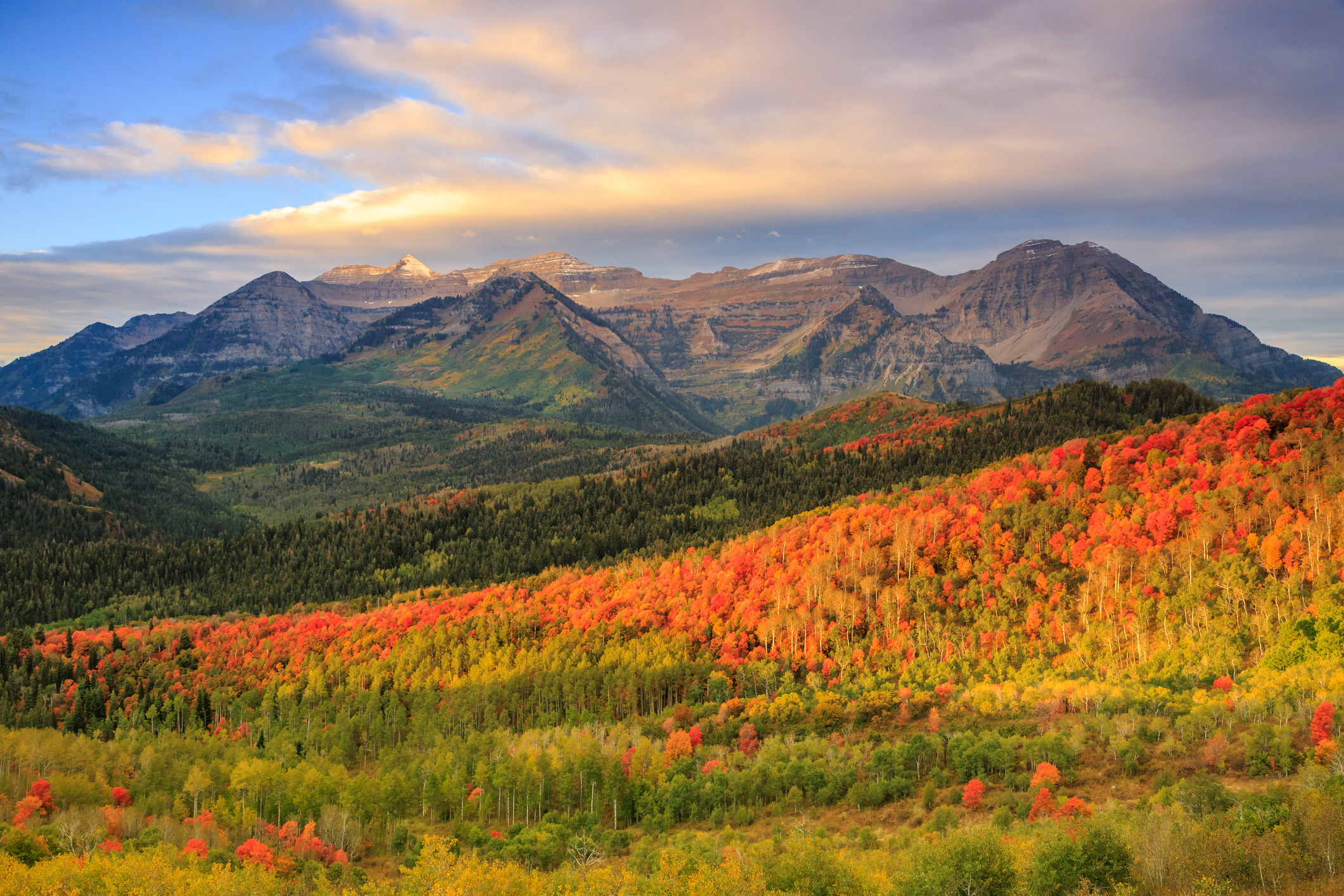 Autumn leaves at dawn in the Wasatch Mountains