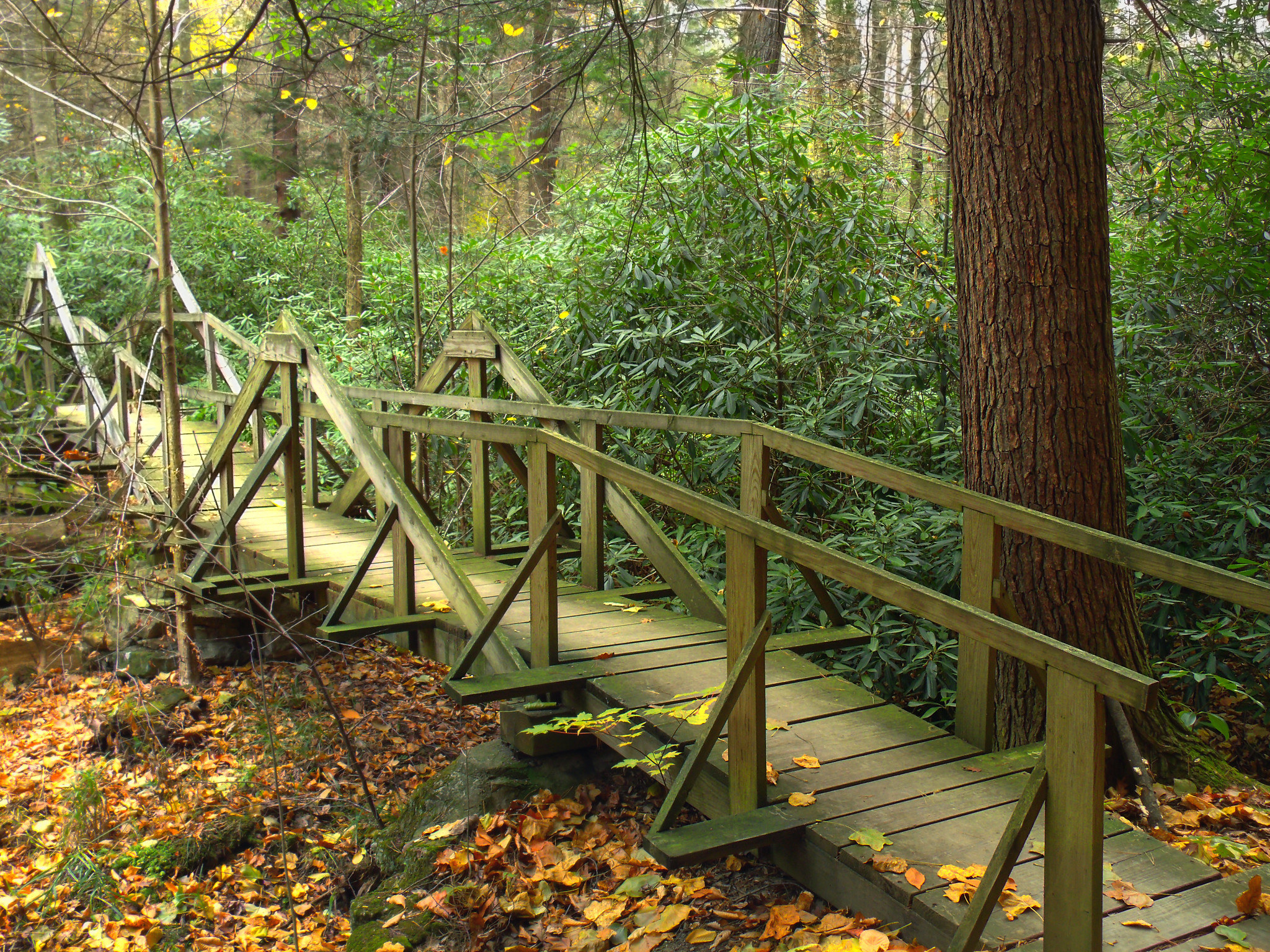 A wooden footbridge surrounded by trees and autumn leaves that have fallen on the ground