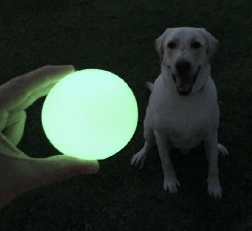 reviewer photo of hand holding glow-in-the-dark green ball in front of dog
