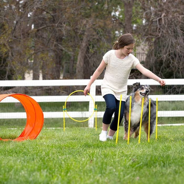 girl leading Australian Shepherd through the obstacle course