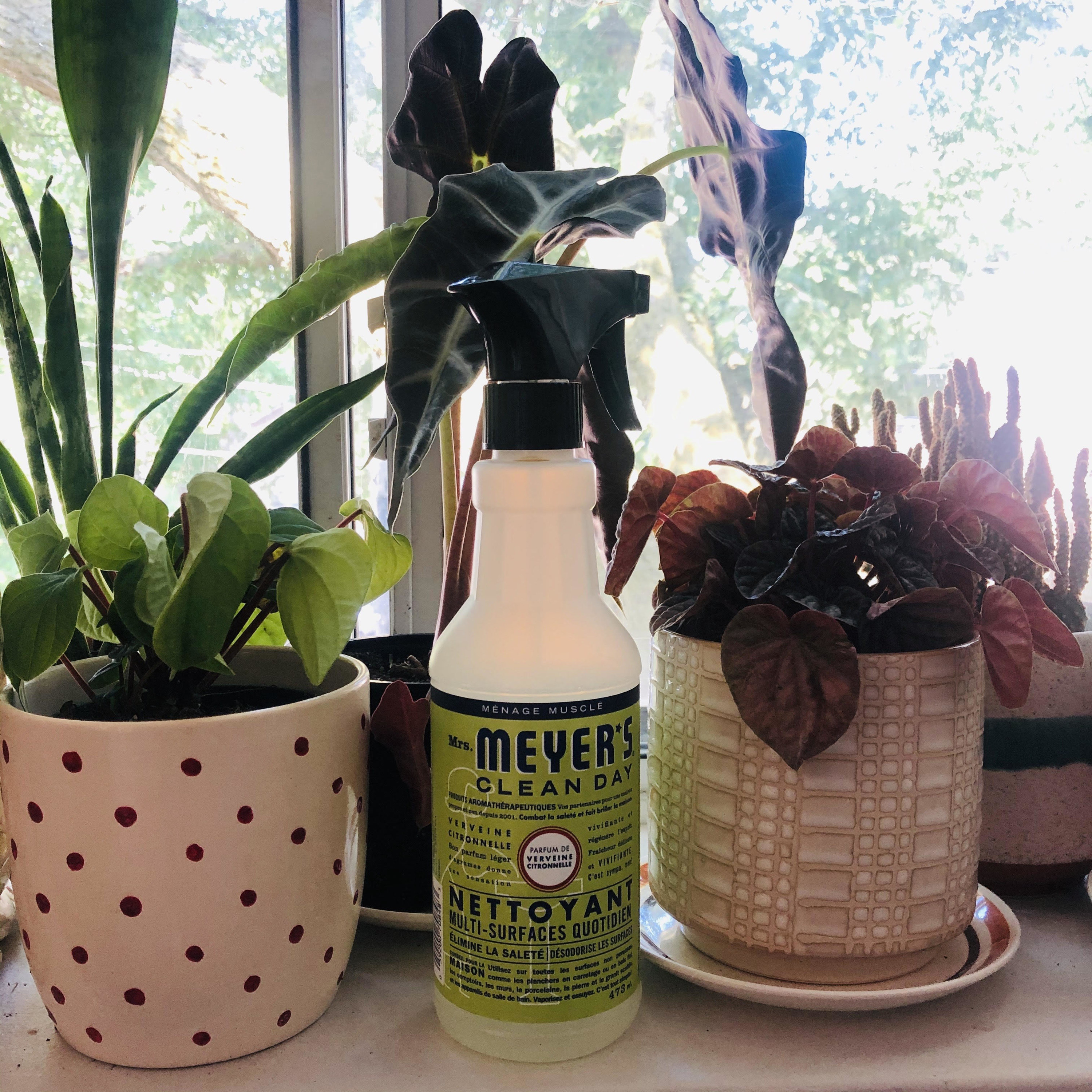 A bottle of multi-surface cleaner surrounded by plants