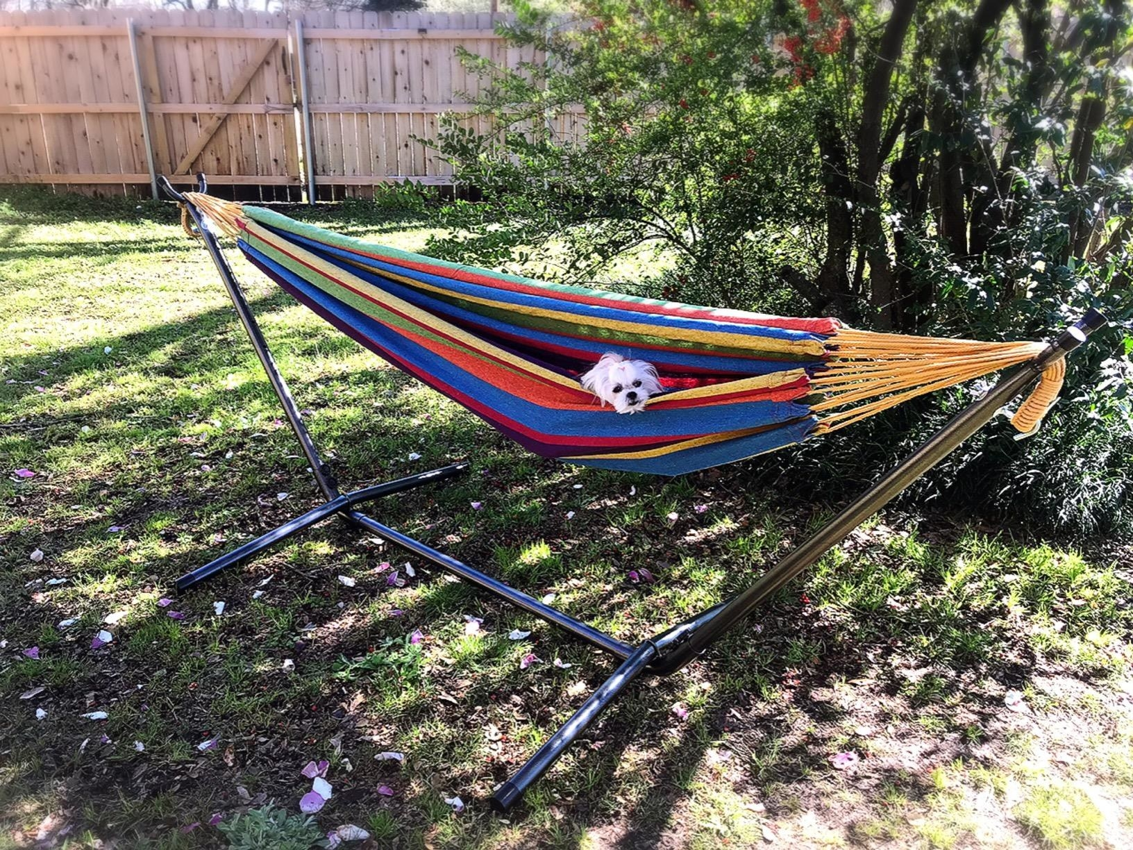 black hammock stand holding colorful striped hammock with a small dog in it