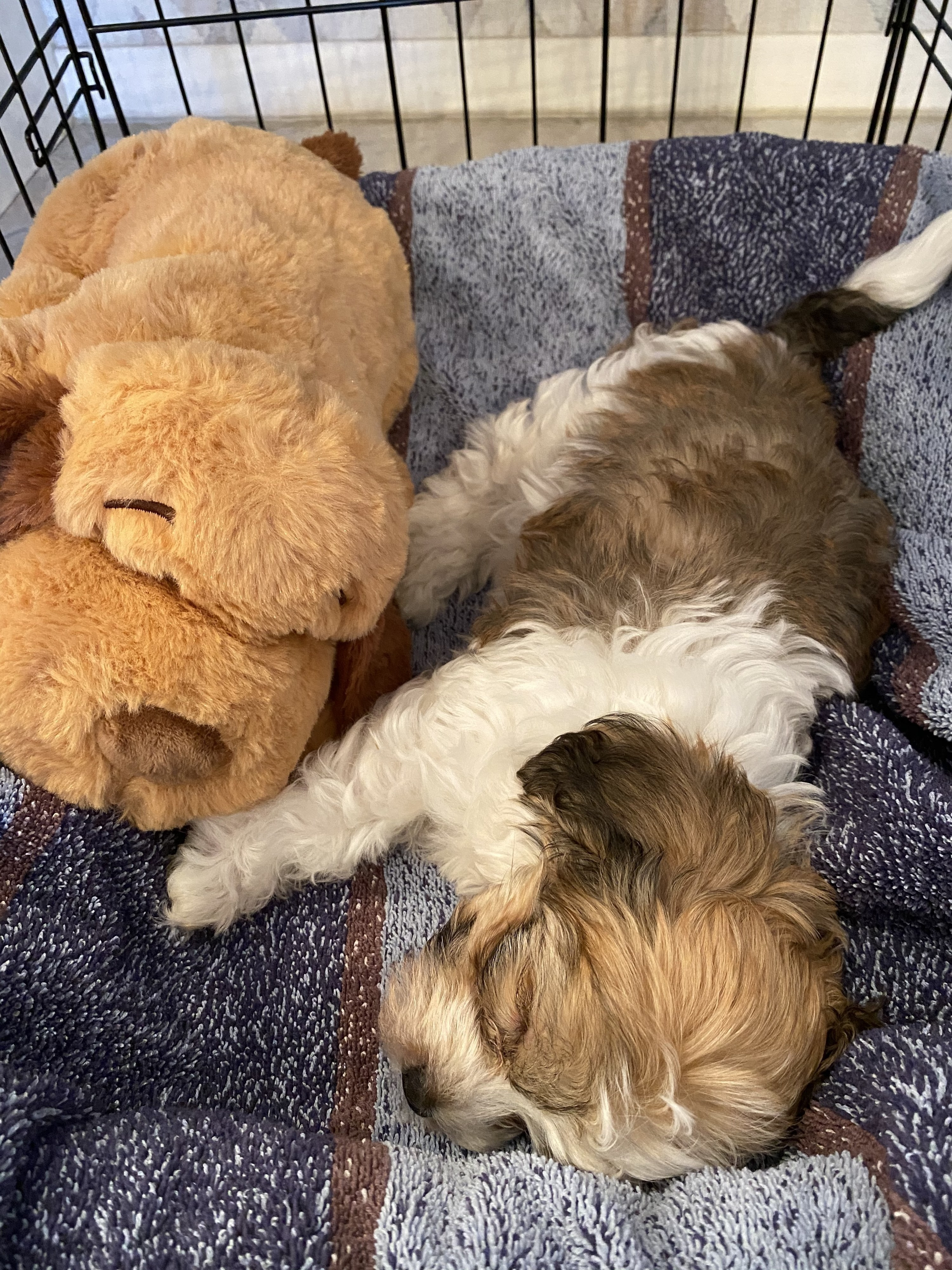 A puppy snuggling with the stuffed Snuggle Puppy