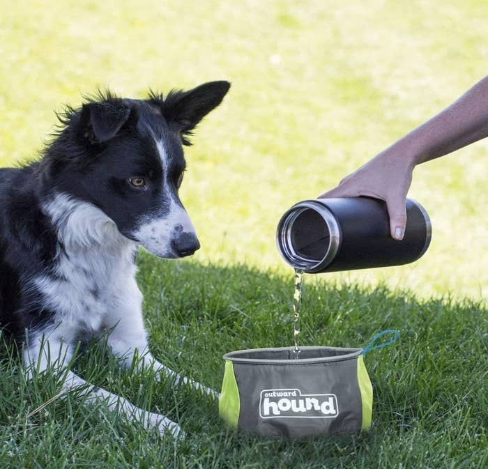 A model's hand pouring water into a gray and lime green pouch bowl while a pooch watches