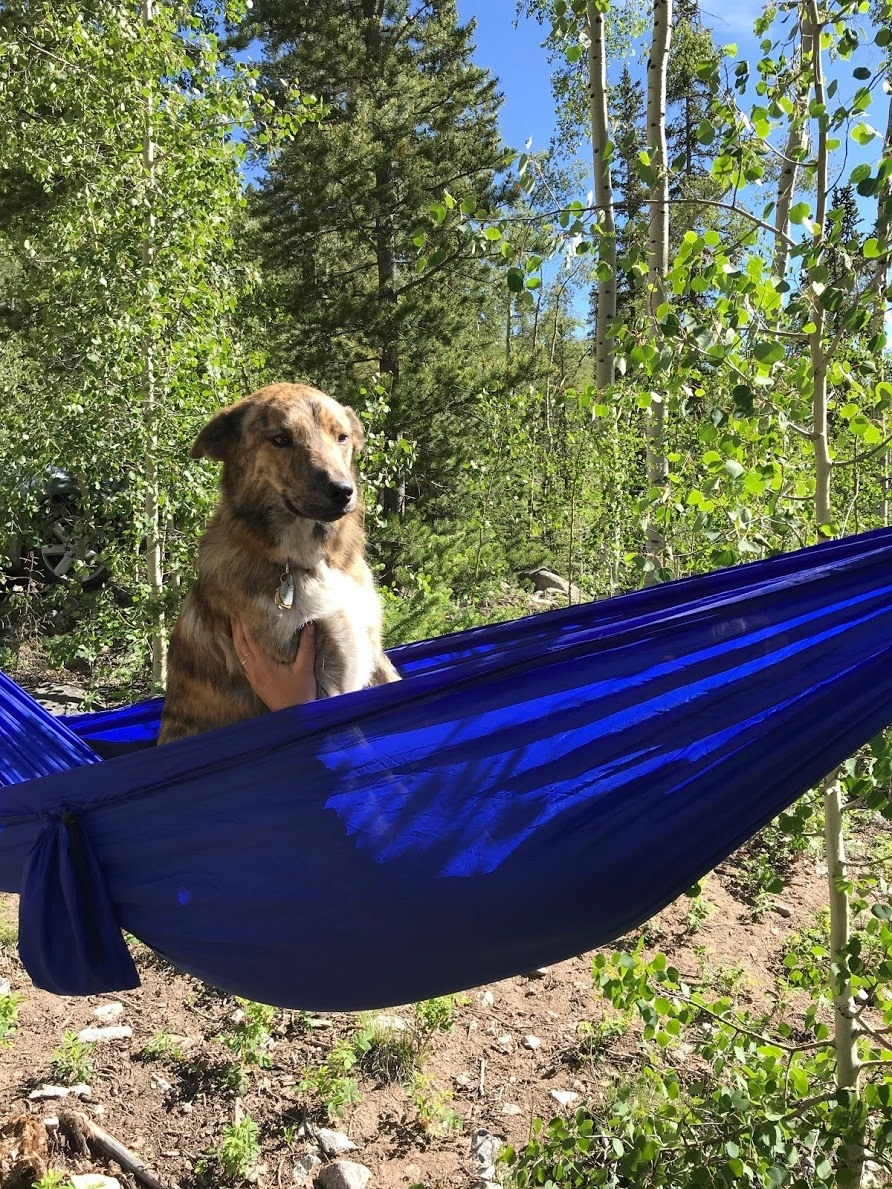 a dog sitting in a hammock in the woods