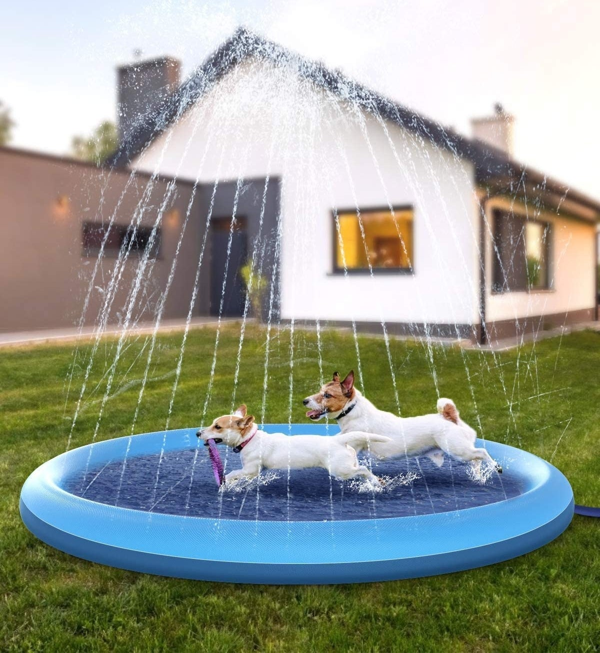 two dogs in blue pool with sprinkler