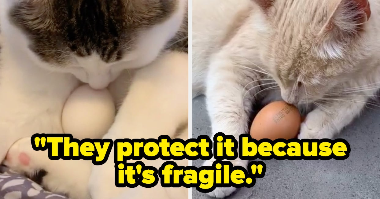 People Are Giving Their Cats Eggs To See If They