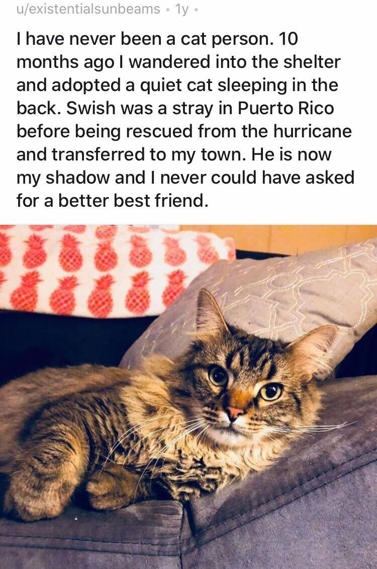 Cat lays on new owner's couch after formerly living in Puerto Rico, being rescued from the hurricane, and placed into a shelter