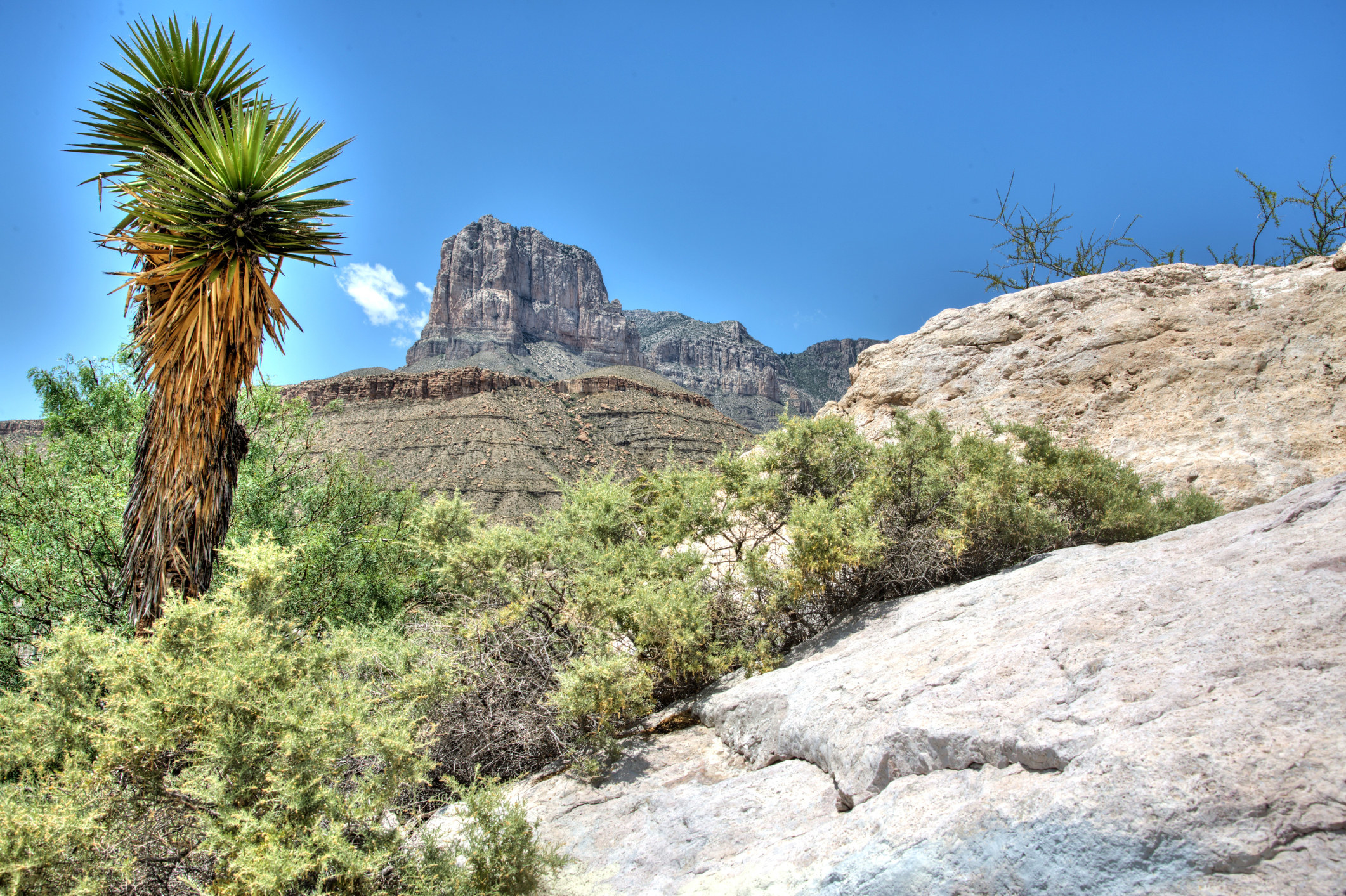 El Capitan, the iconic peak of Guadalupe Mountains National Park, with a lone palm tree standing before it.