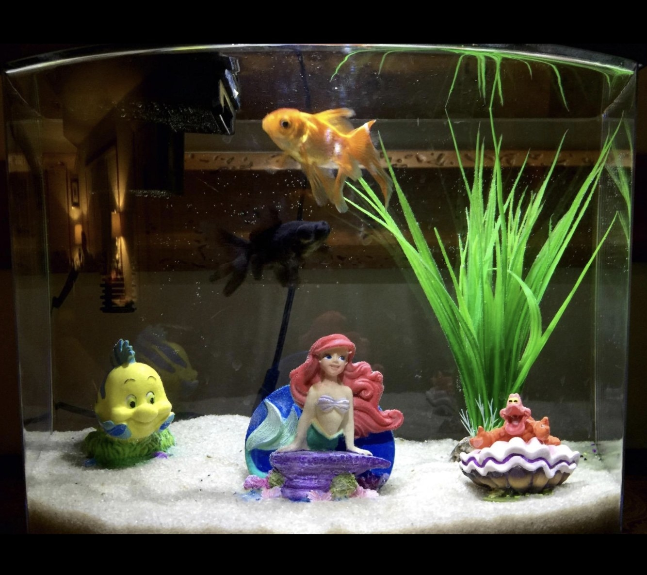 Reviewer photo of the sand in their fish tank