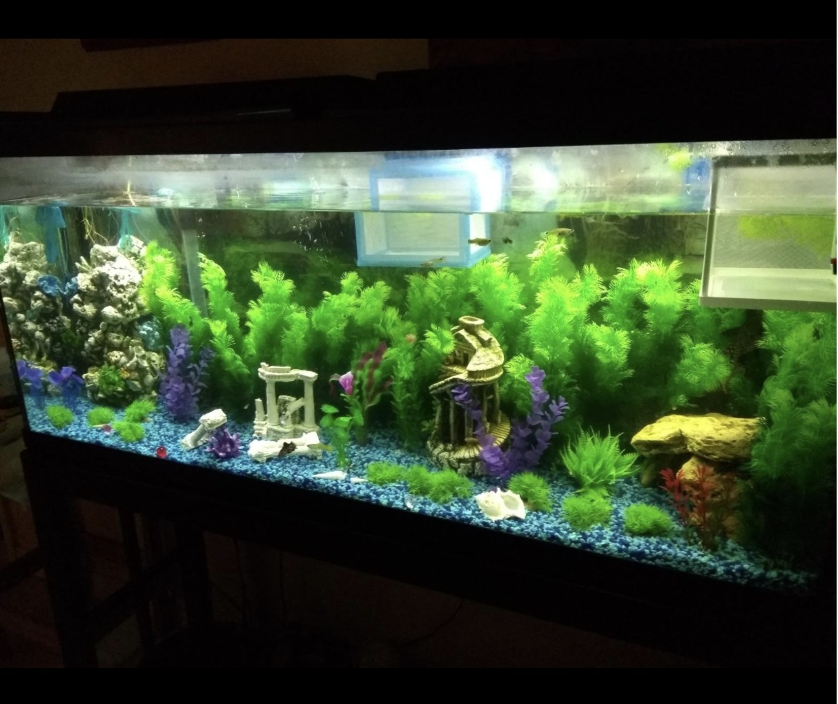 Reviewer photo of tall green fake plants in a large fish tank