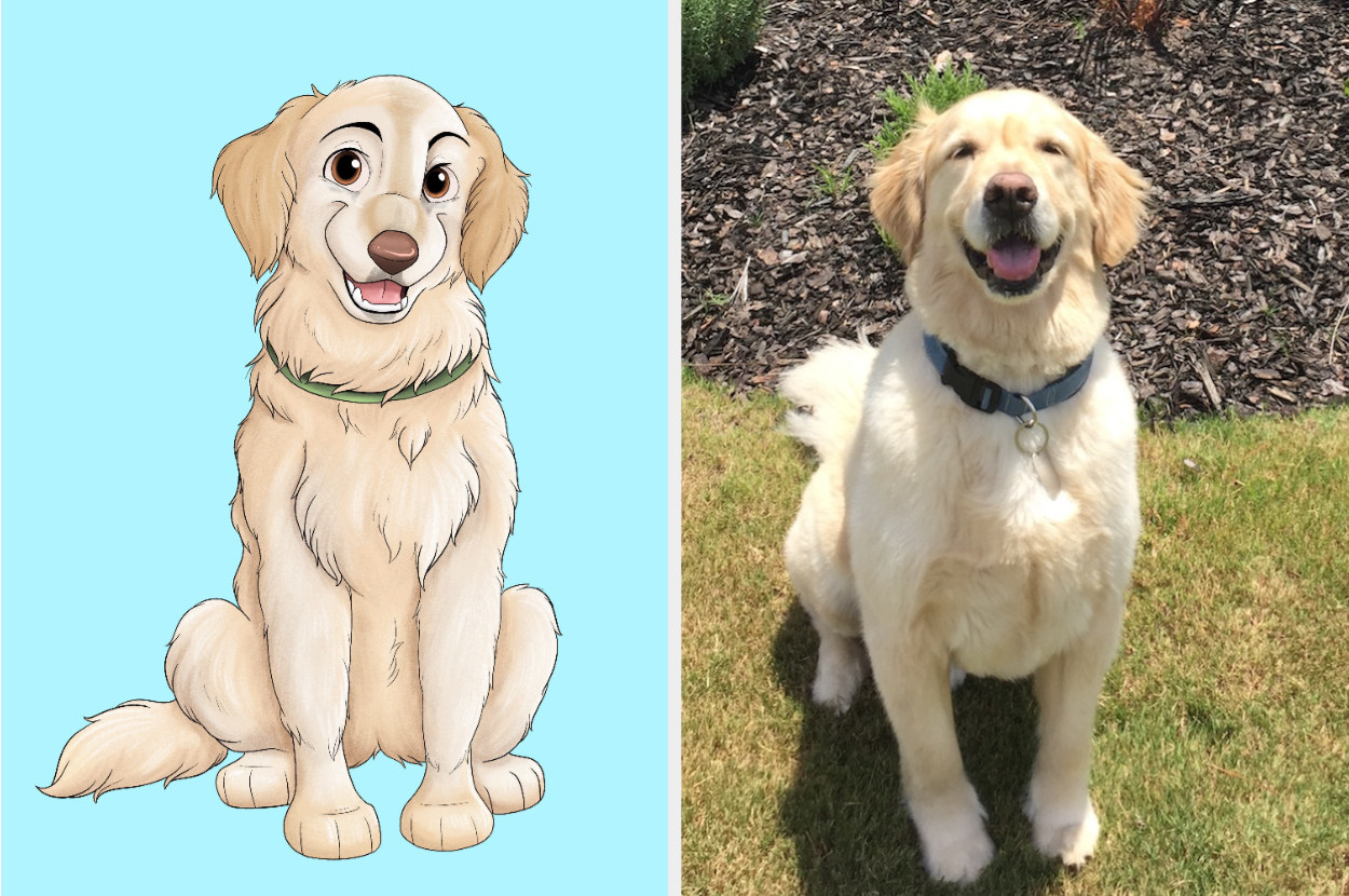to the left: an illustrated drawing of a golden retriever in a disney animation style, to the right: a photo of the dog the illustration was based on