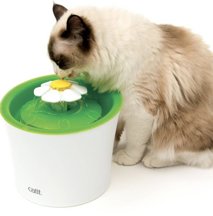 A cat drinking water from a white plastic fountain with a green top and white and yellow flower