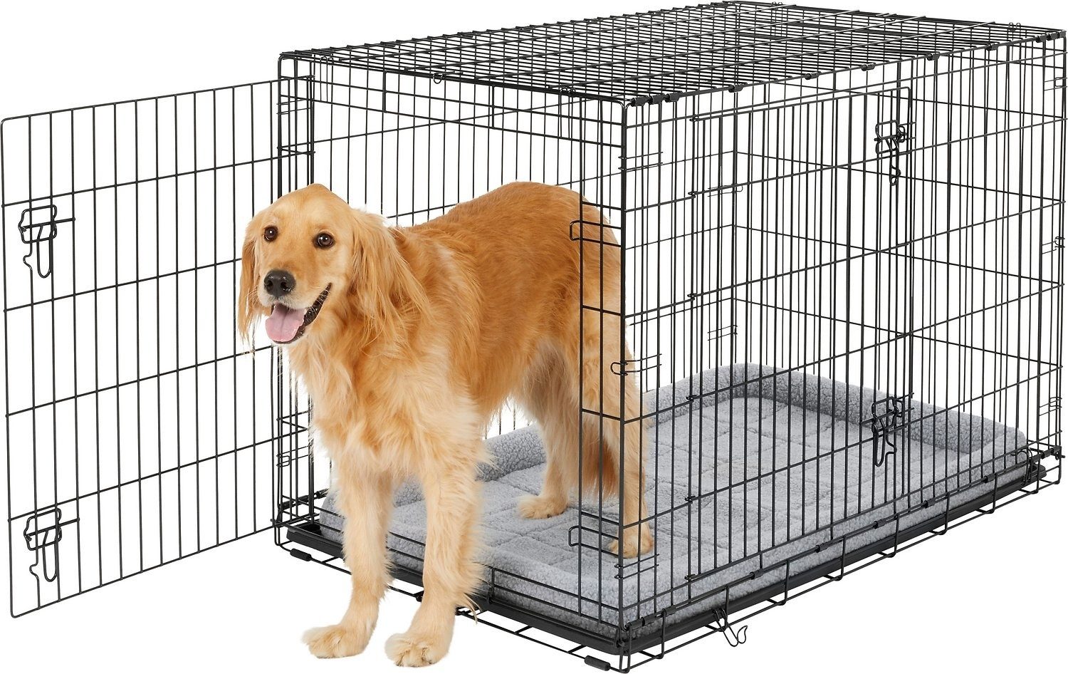 A Golden Retriever dog standing up in the metal dog crate.