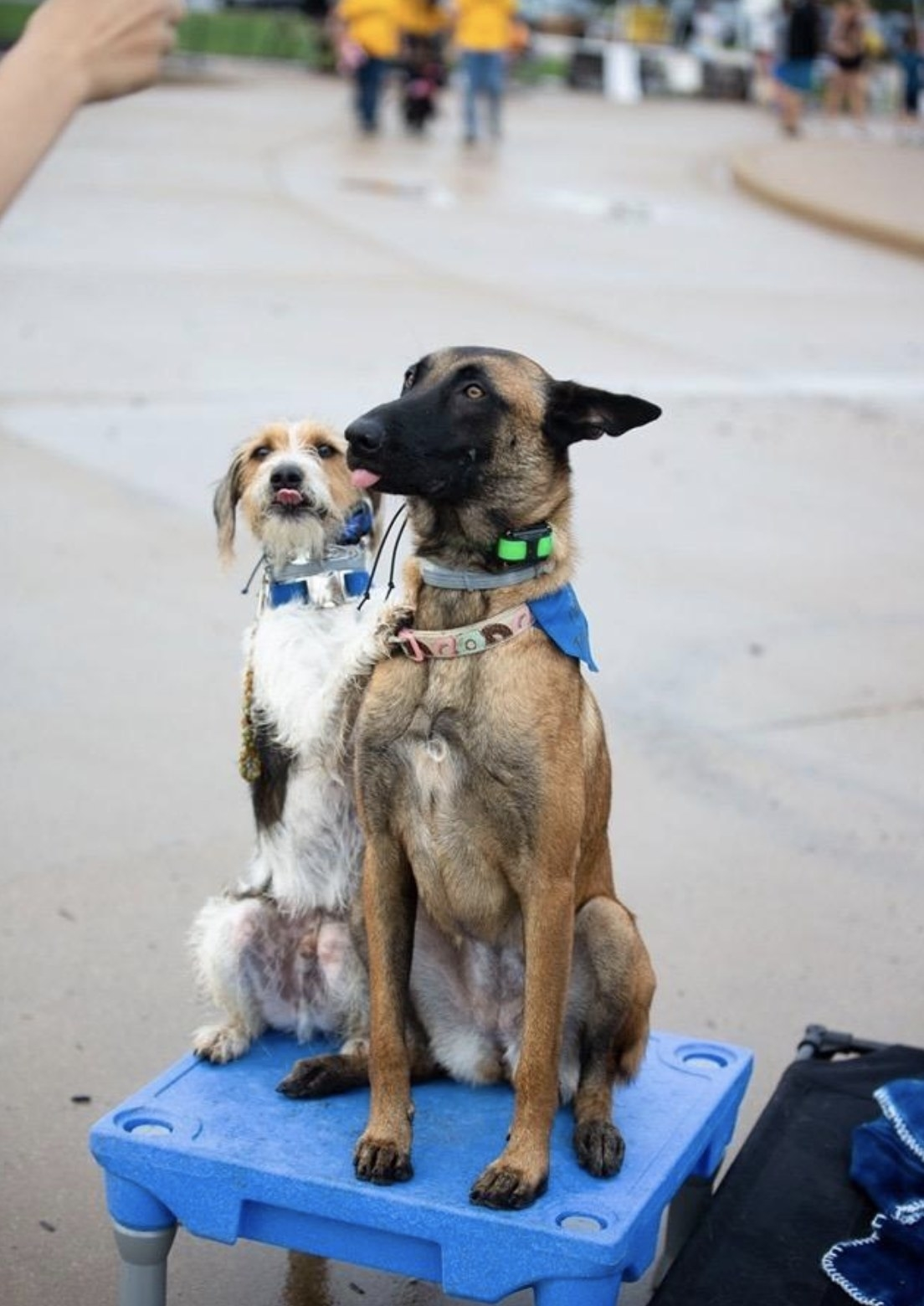 A reviewer image of two dogs on the platform