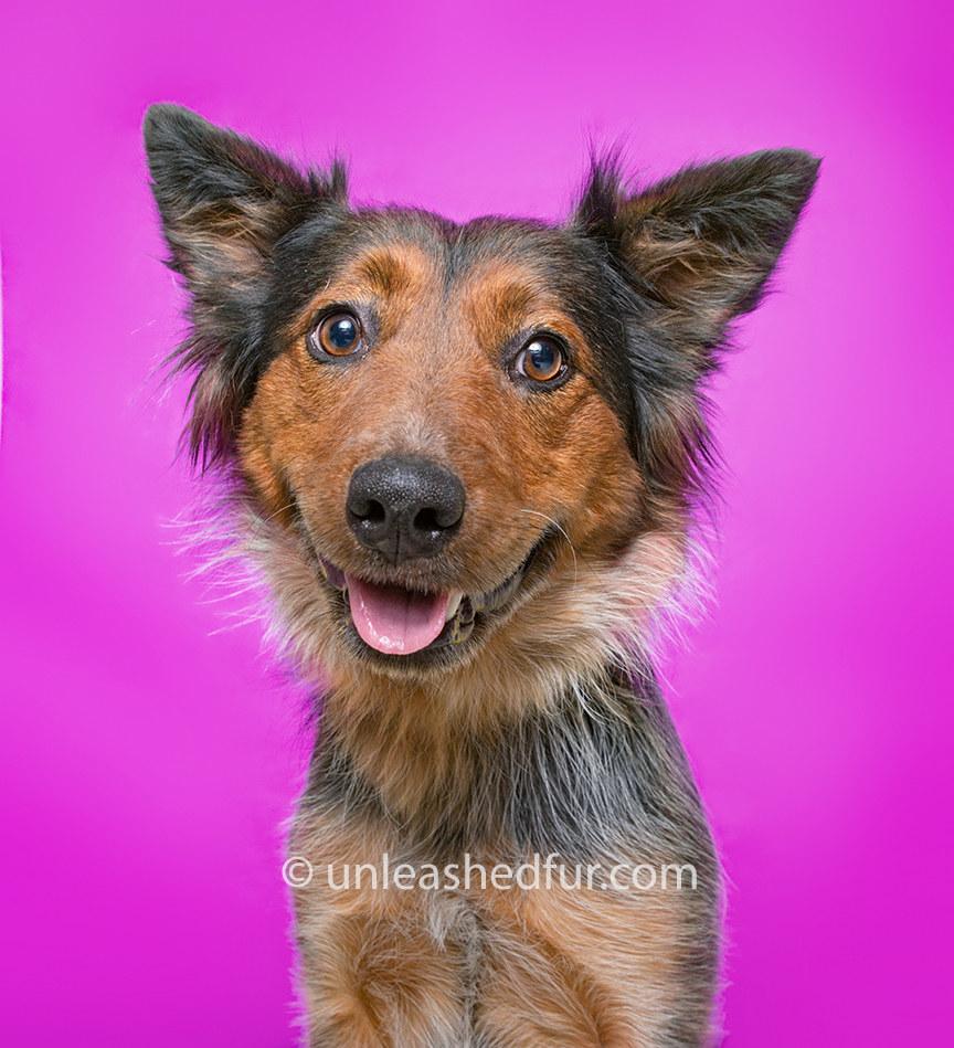 Dog smiling sweetly