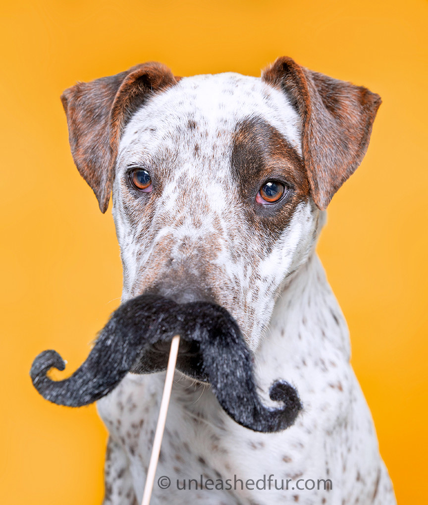 Dog with a fake mustache