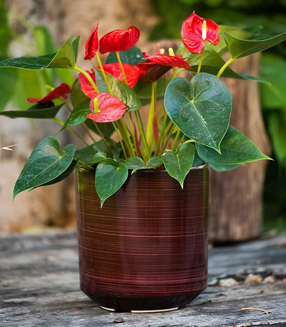 A round planter with a burgundy red finish