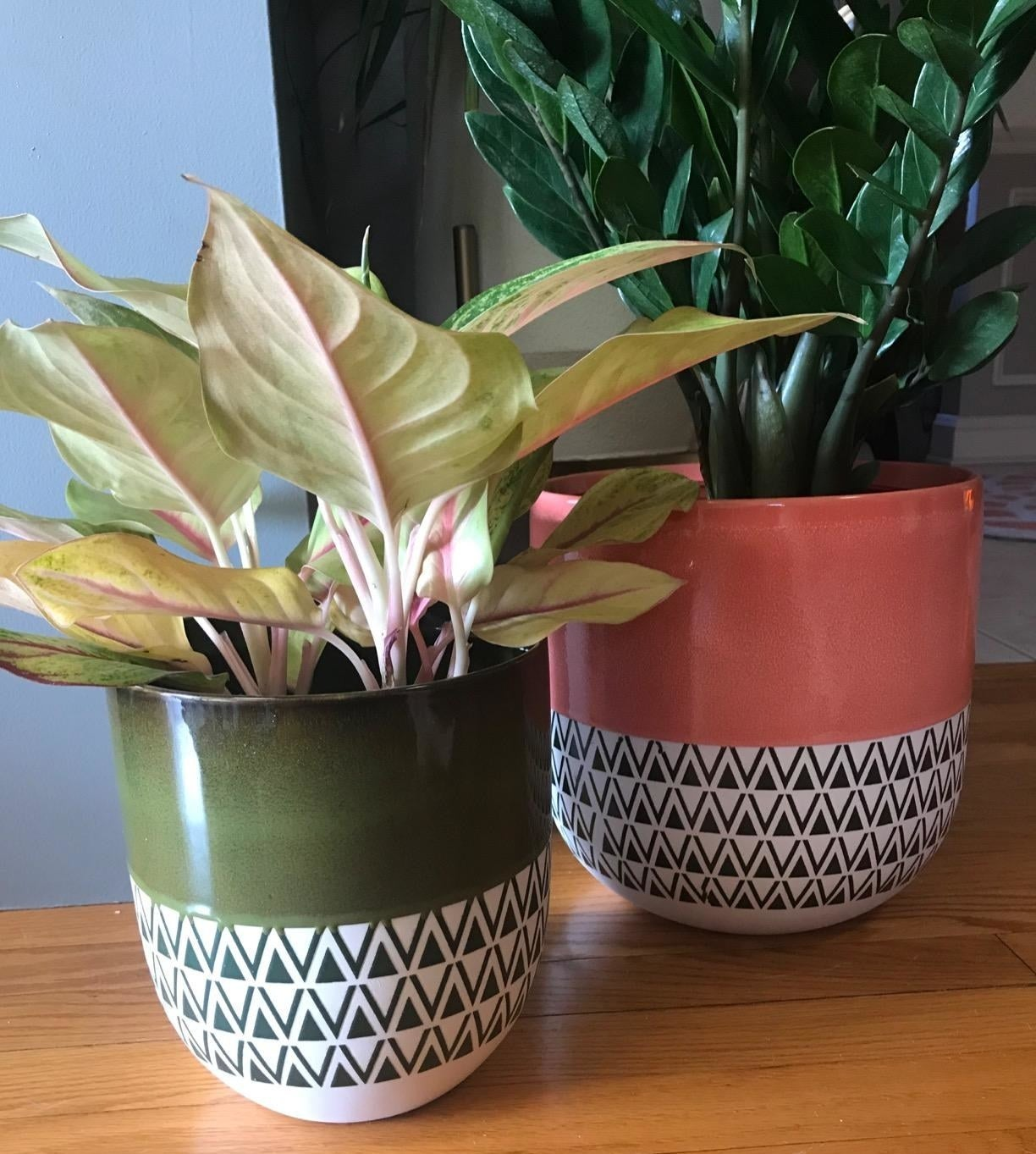 Two two-toned planters, one in moss and one in coral