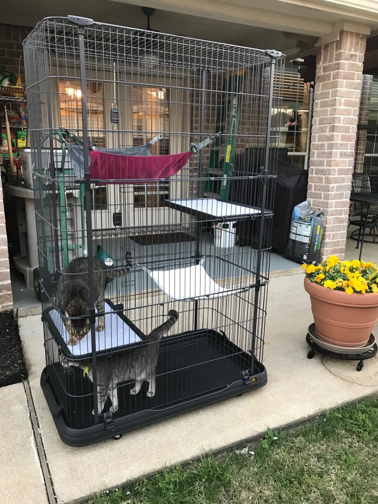 Reviewer photo of two of their cats in the playpen