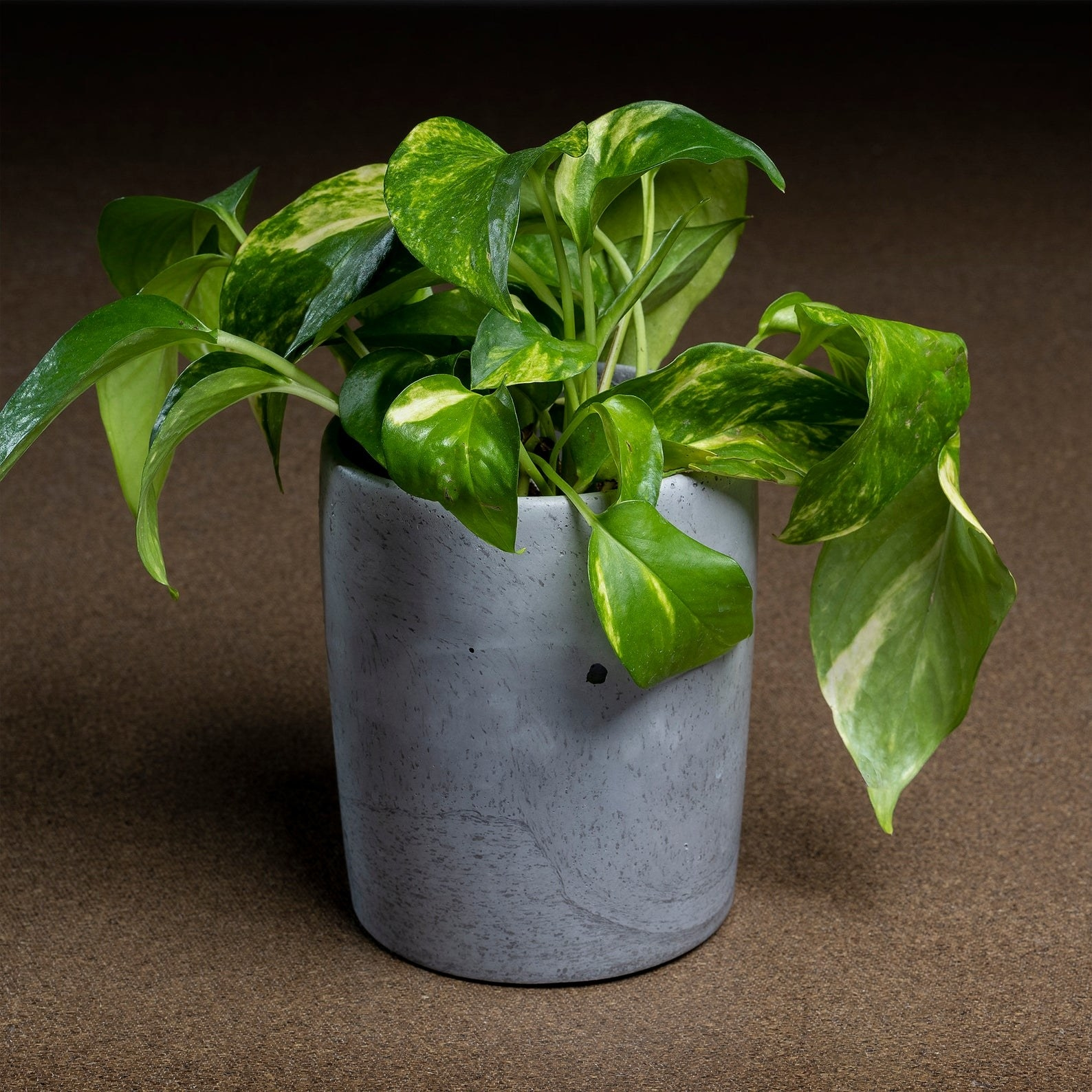 A round, light-gray, marbled planter with a plant inside