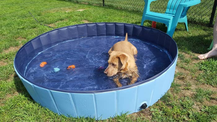 Reviewer's large dog relaxing in the pool with plenty of room leftover
