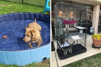 Side by side of a dog in a kiddie pool and two cats in a tiered playpen
