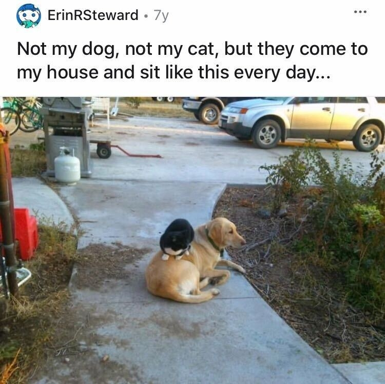 A dog sitting on a home's walkway while a cat sits atop the dog, despite neither belonging to the homeowner
