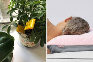 Gnat sticky traps / model sleeping on a towel pillowcase