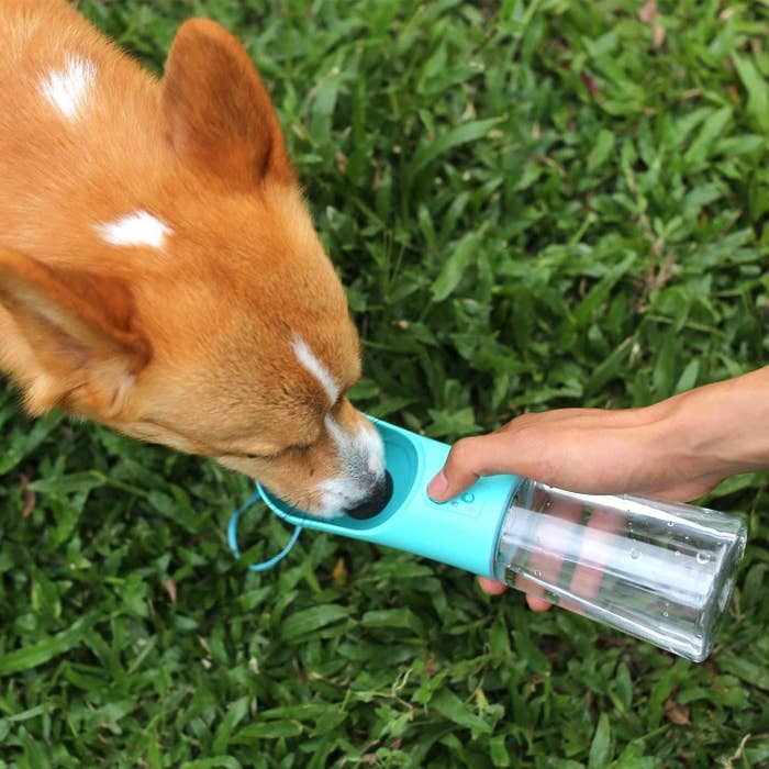 A dog drinking from a small water bottle with a bowl attached to the lid