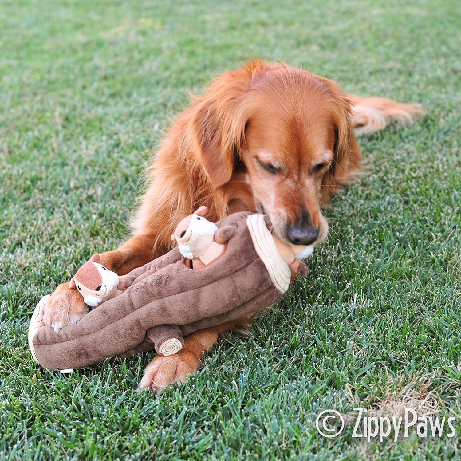 Dog chewing on log-shaped plush toy with included squirrels