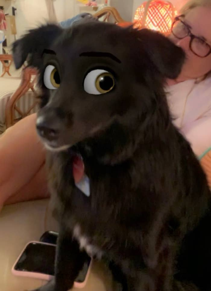 This Snapchat Filter Makes Your Dog Look Like A Disney Cartoon