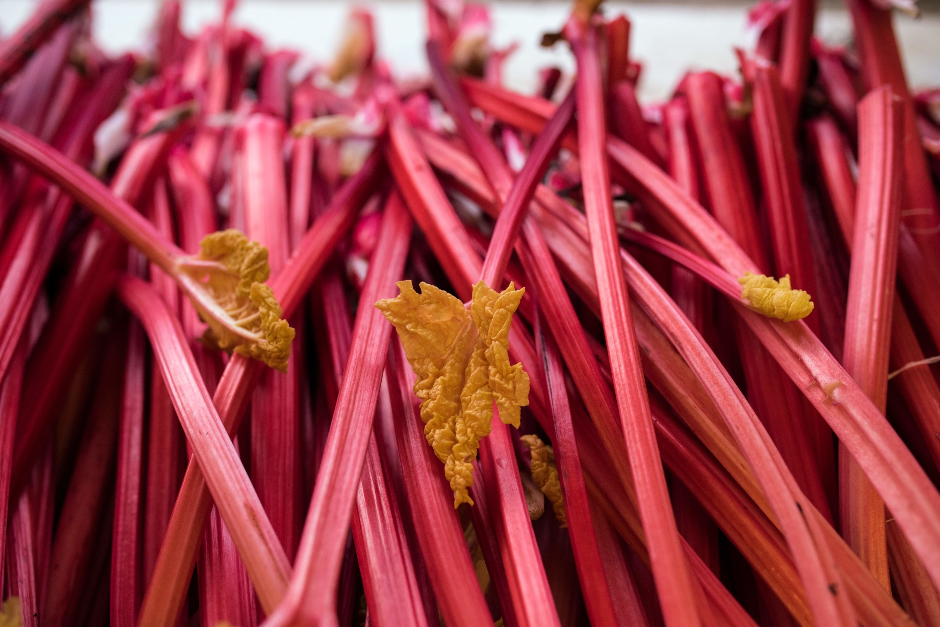 A pile of fresh rhubarb with leaves visible