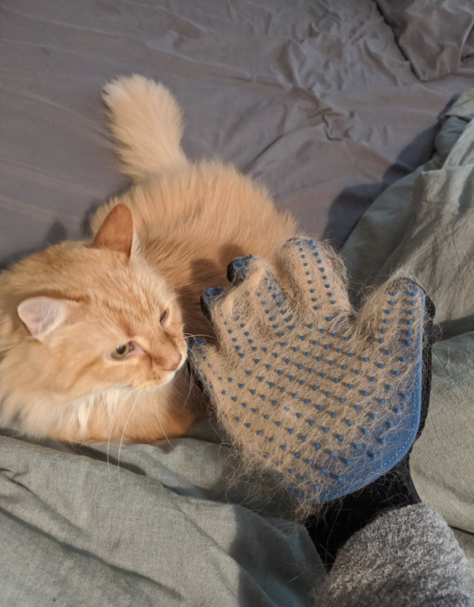 A reviewer holding the glove full of cat hair next to their cat