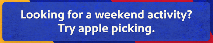 Looking for a weekend activity? Try apple picking.