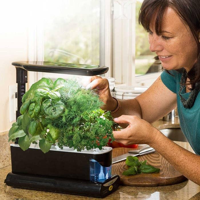 A three-cup plant feeder filled with full grown herbs. It has a light attachment at the top.