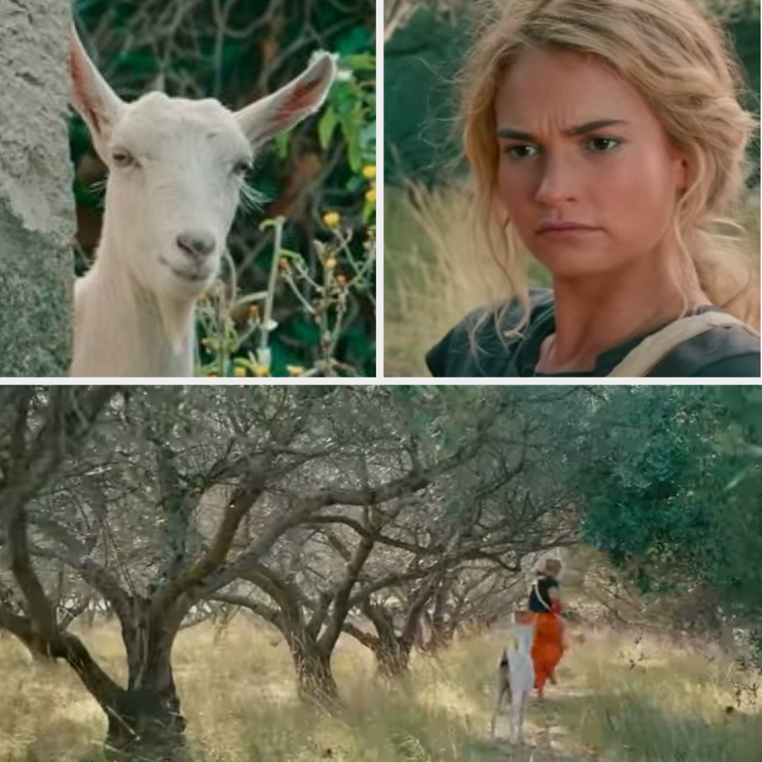 Donna being chased by a goat after they have a stare-off