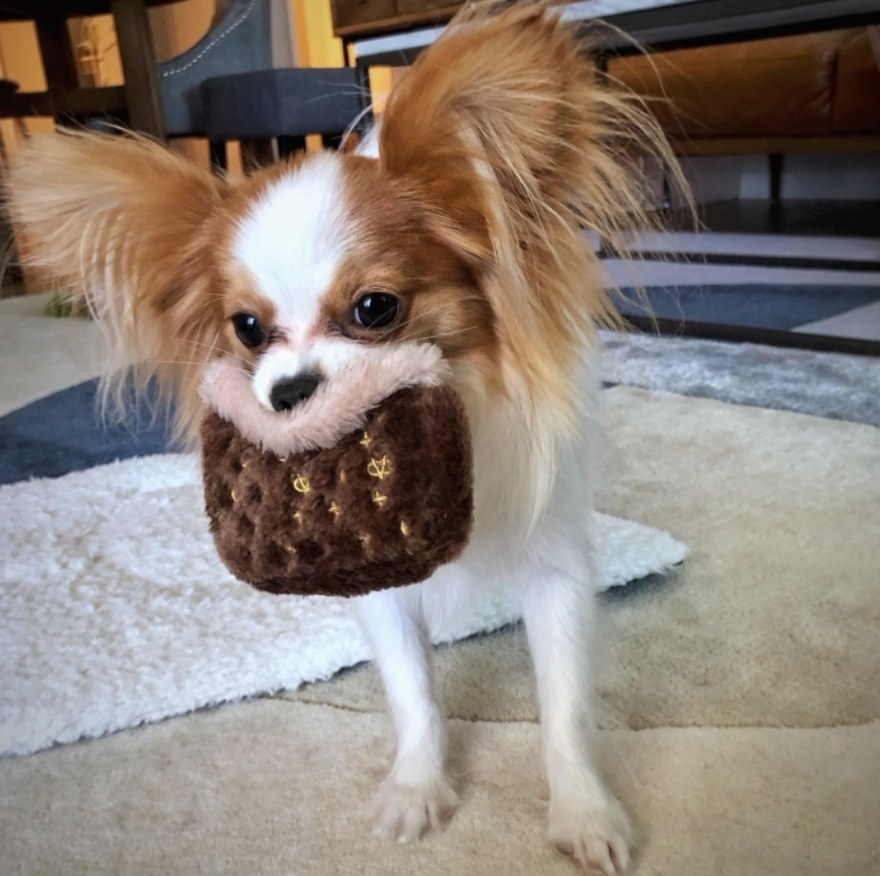 Reviewer's small dog holding the Chewy Vuitton dog toy in its mouth