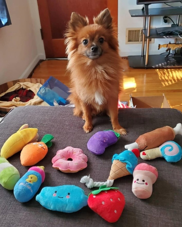 Reviewer's dog surrounded by the plush dog toys