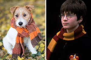 A dog with a scarf is standing in the leaves with Harry Potter in a scarf on the right