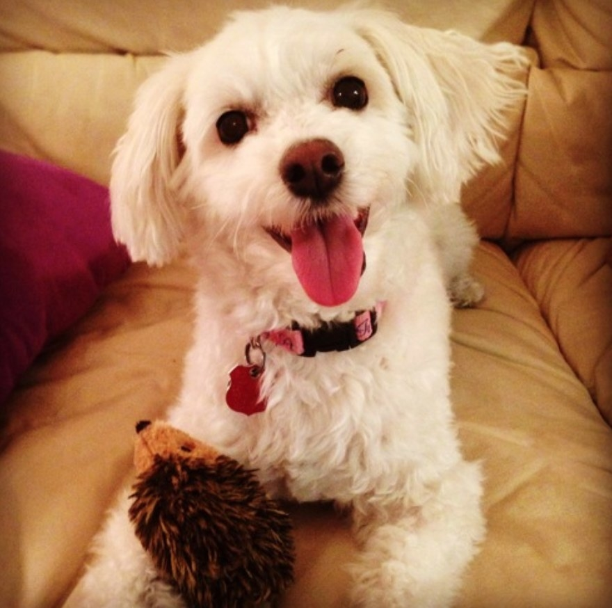 Reviewer's dog with hedgehog chew toy