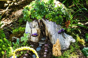 A tiny house in a tree stump with succulents growing out of the top