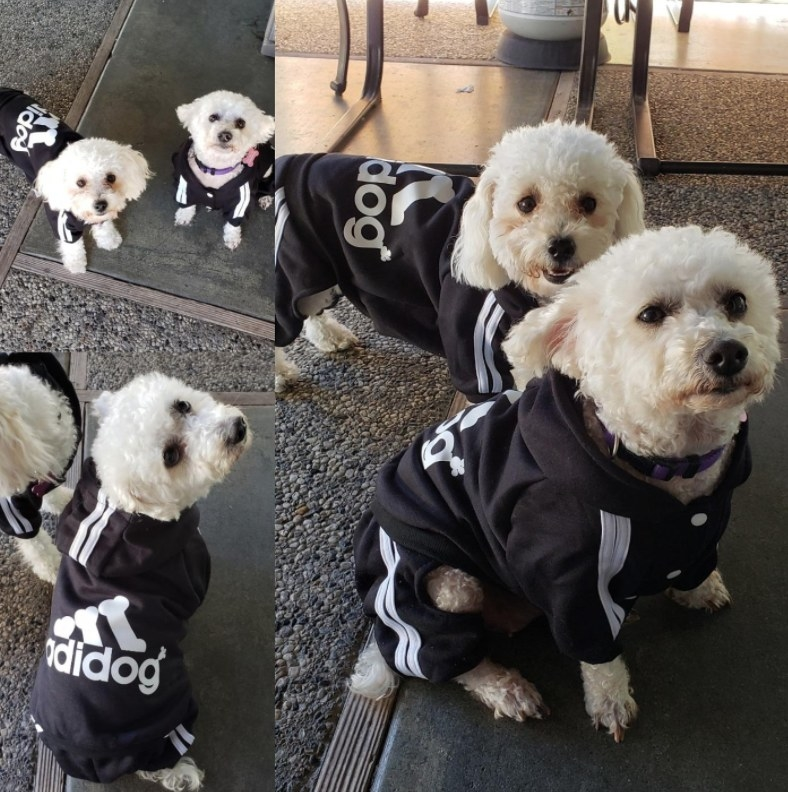 "Reviewer's dog wearing the ""Adidog"" black and white track suit-like shit"