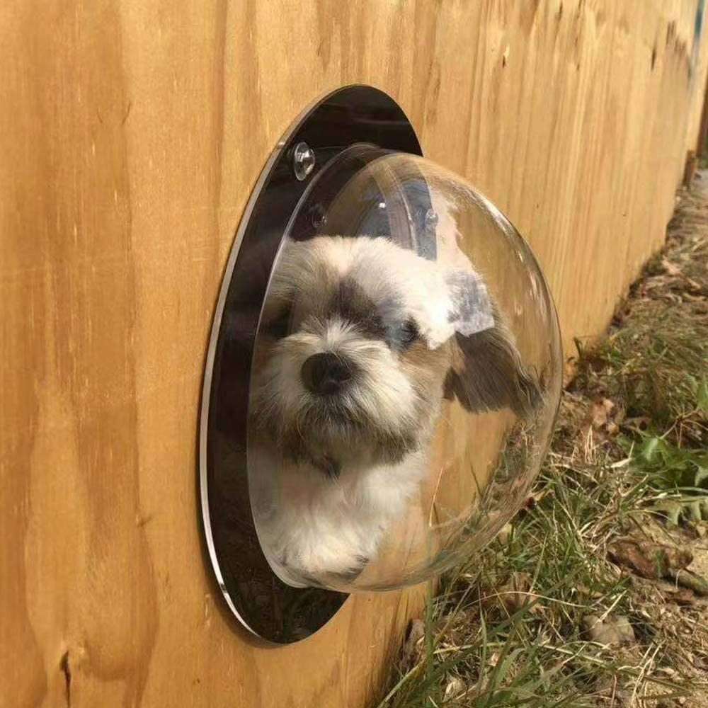 Dog looking out the bubble-shaped window from their fence