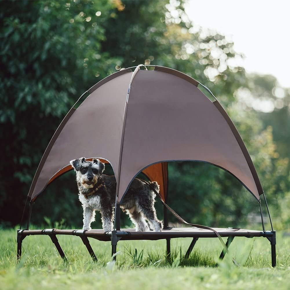 Dog standing in the grey canopy bed