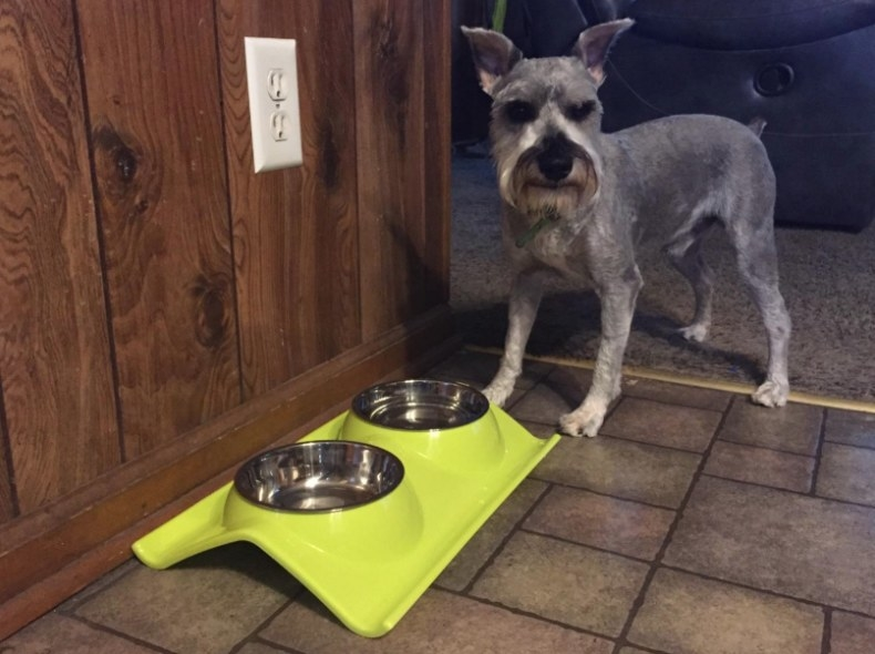Reviewer's dog eating from the two-bowl green set