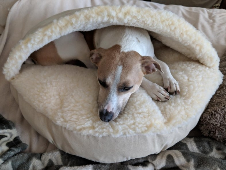 Reviewer's dog resting in the cave-like fleece dog bed