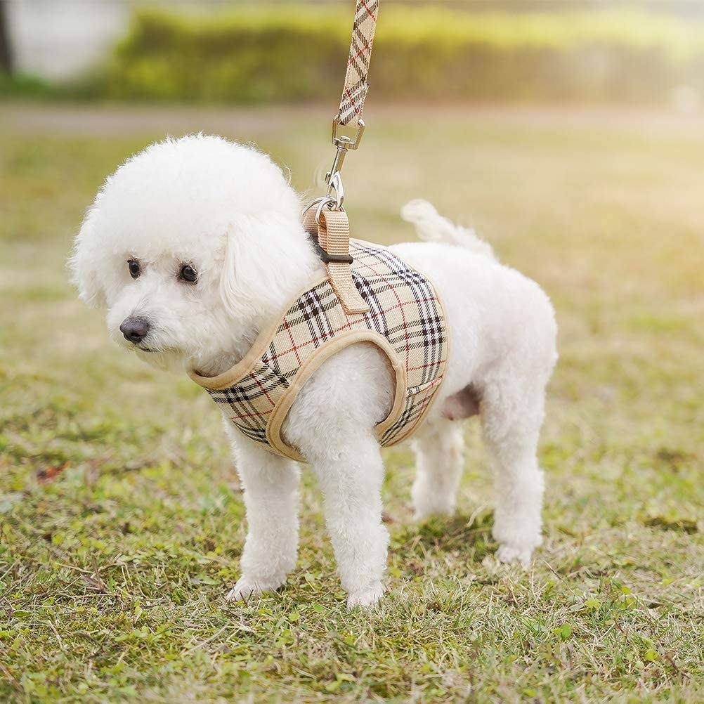 Dog in the Burberry-like harness and leash set