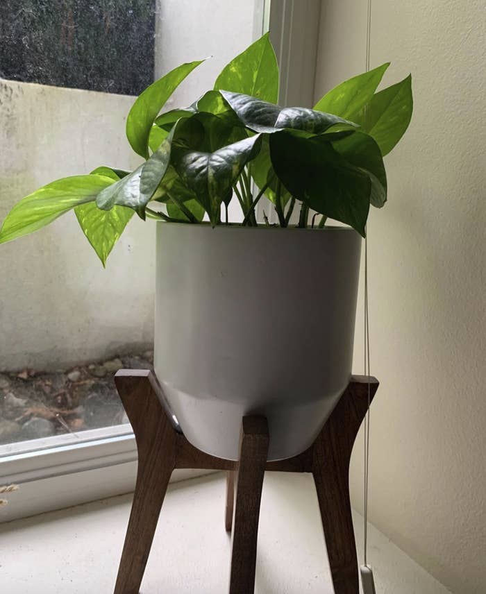 the plant sitting in a pot on top of a wooden planter